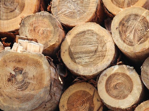 杉、米松などの天然無垢素材